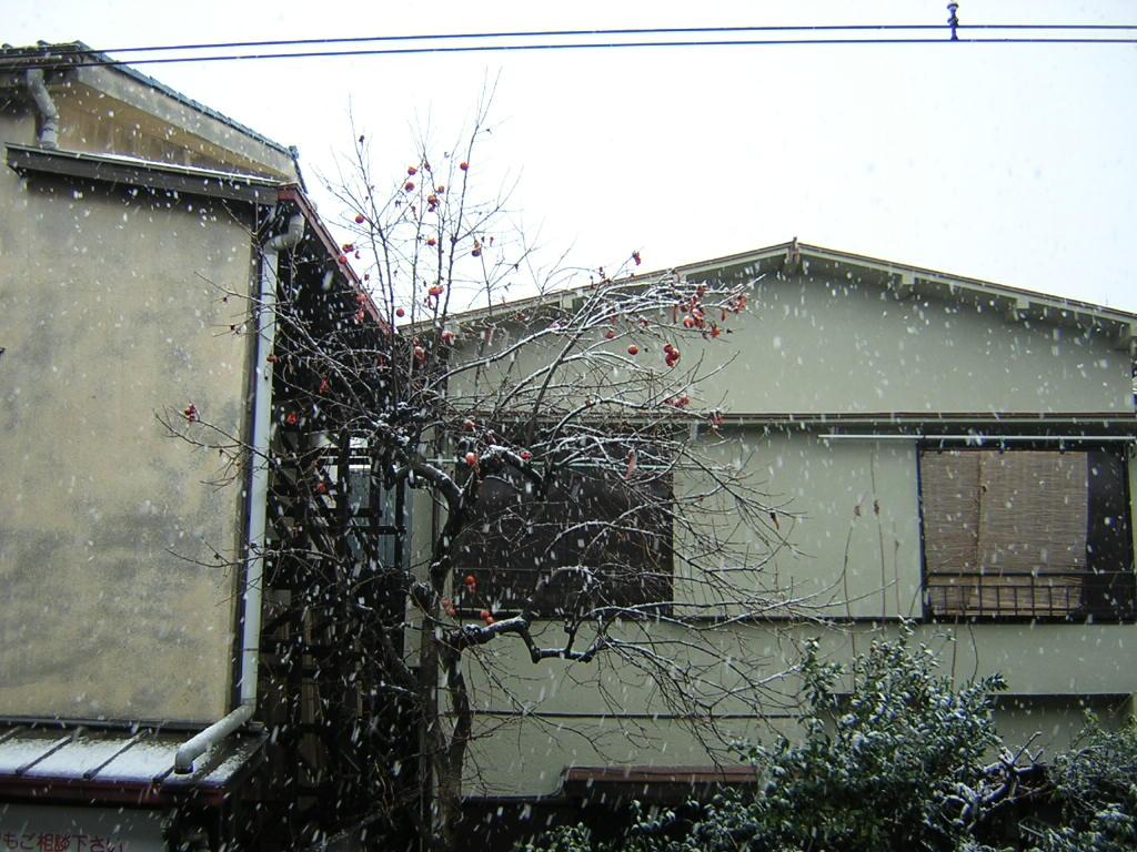 20041229-2.jpg